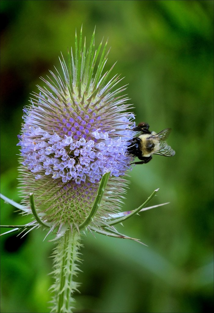 A Bee Rated Photo