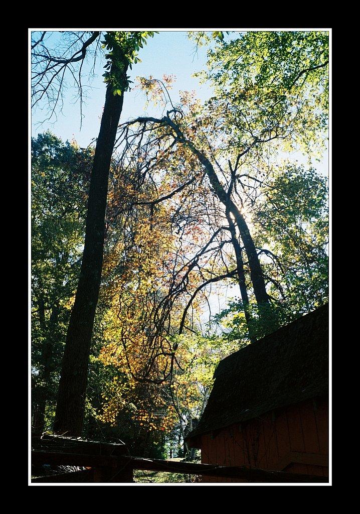 Back Yard Color