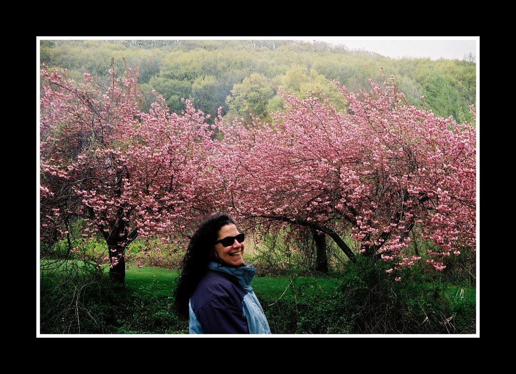 Blossoms at Hurd Park