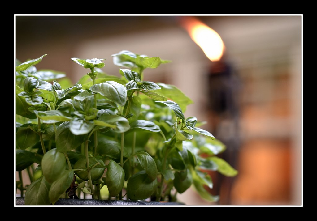 Basil On Deck