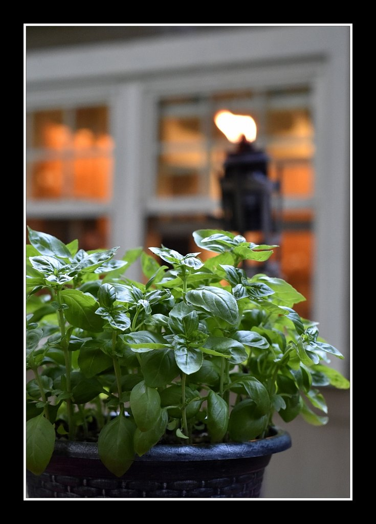 Basil On Deck