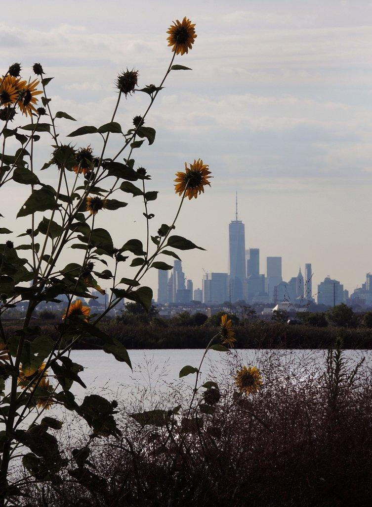 Sun-Flowers-NYC-3572-copy.jpg