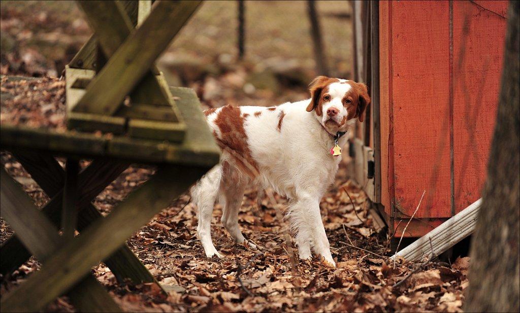 Copper In The Yard